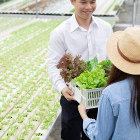 manufacturers-send-baskets-organic-vegetables-for - 3EDNJKU